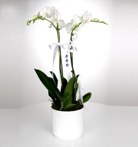 Beyaz Seramikte Çiftli Orkide