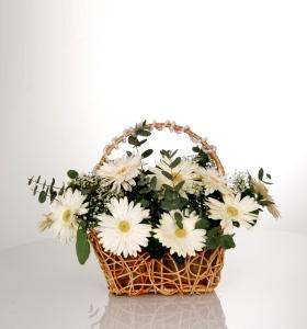 Sepette Beyaz Gerbera