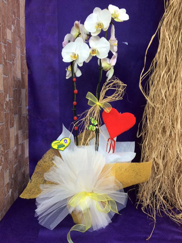 Çift Dallı Kalpli Orkide